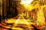 0006-Waldweg_Goldene_Abendsonne