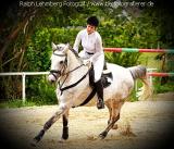 Pferd004