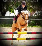Pferd005