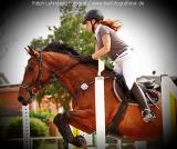 Pferd006