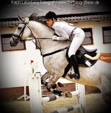 Pferd012