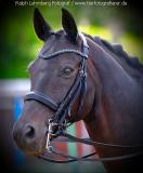 Pferd001