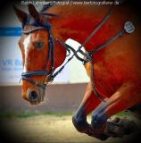 Pferd002