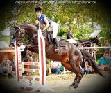 Pferd007